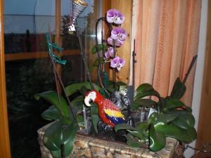 Nochmal der Ara in unseren Orchideen!
